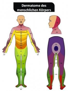 dermatome des menschlichen körpers