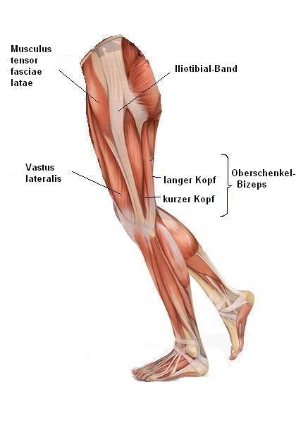 Ausgezeichnet Untere Extremität Anatomie Muskeln Zeitgenössisch ...