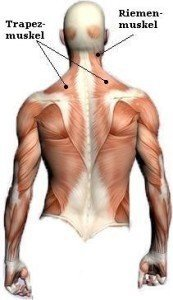 Anatomie, hintere, Rücken, lumbal, Lenden, Trapezmuskel, Schulterblatt, Bindegewebe, thorakolumbal, Manipulation, Massage, Entzündung, Tendinitis, Sehnenentzündung, Kontraktur, Verhärtung, Schmerzen, Schmerz, Physiotherapie und Rehabilitation