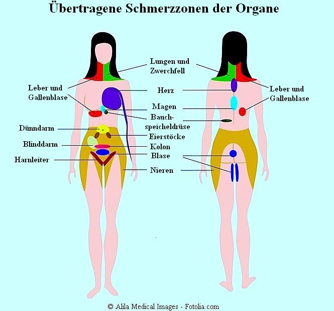 Bauchschmerzen,ausstrahlen,Organe,übertragen