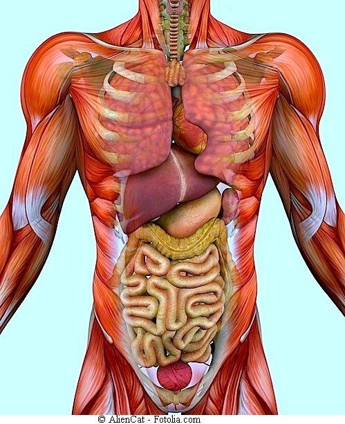 Schmerzen in der linken Flanke, Niere, Colon, Milz oder Bauch