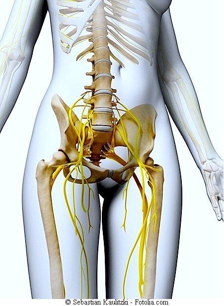 Schmerzen im Unterleib,Unterbauch,Darm,Becken,Nieren