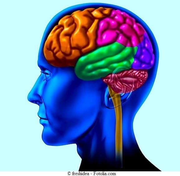 brain lobe sections divisions of mental neurological isolated