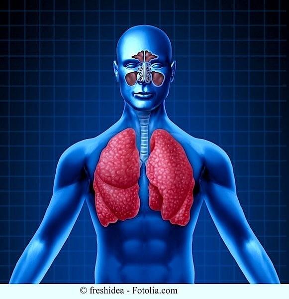 Anatomie,Lunge,Nasennebenhöhlenentzündung