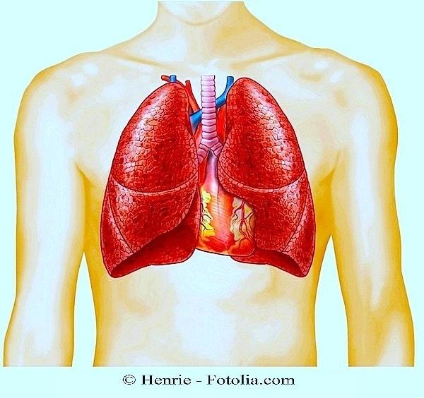 Lunge,Apnoe