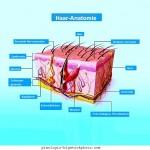 Anatomie,Haut,Lichen,planus