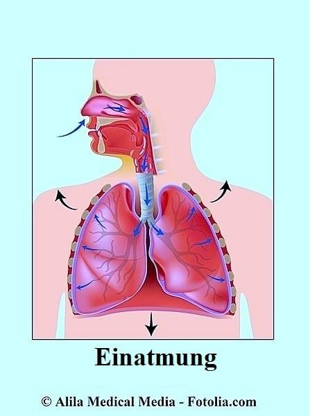 Einatmen,Lungen,Atemnot