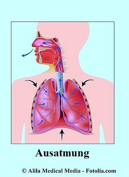 Ausatmen,Luft,Lungen
