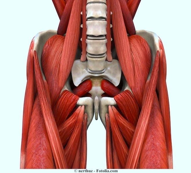 Leiste,Muskel,Schambein,Becken,rechts,links