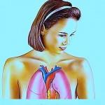 Anatomie der Lungen,Bronchien,Hals