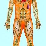Lymphknoten,vergrößerte