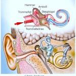 Ohrruptur,Riss im Trommelfell