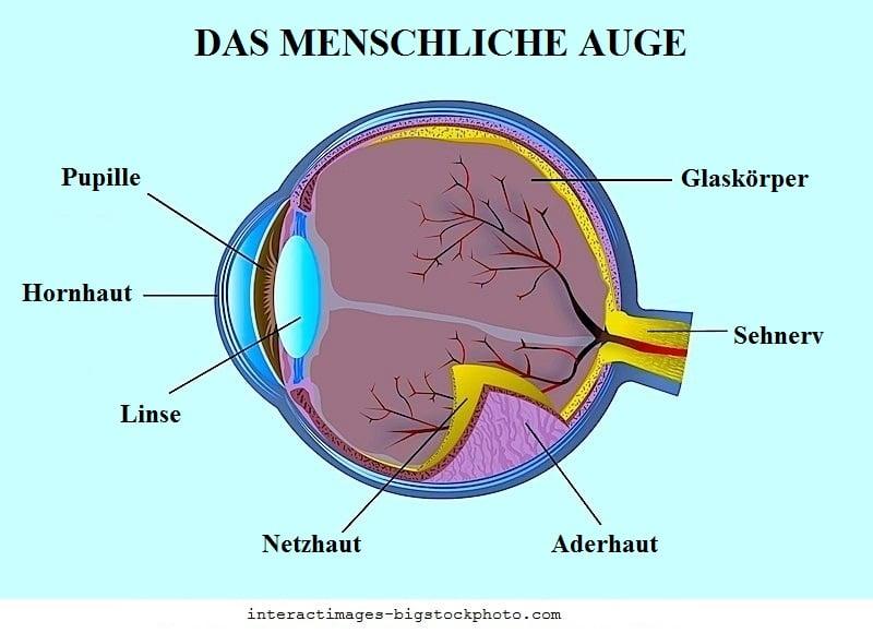 Trockenes Auge,Anatomie,Schmerz