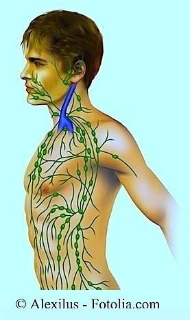Lymphknoten,Hals,Brustkorb