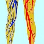 Blutzirkulation,Füße,Beine