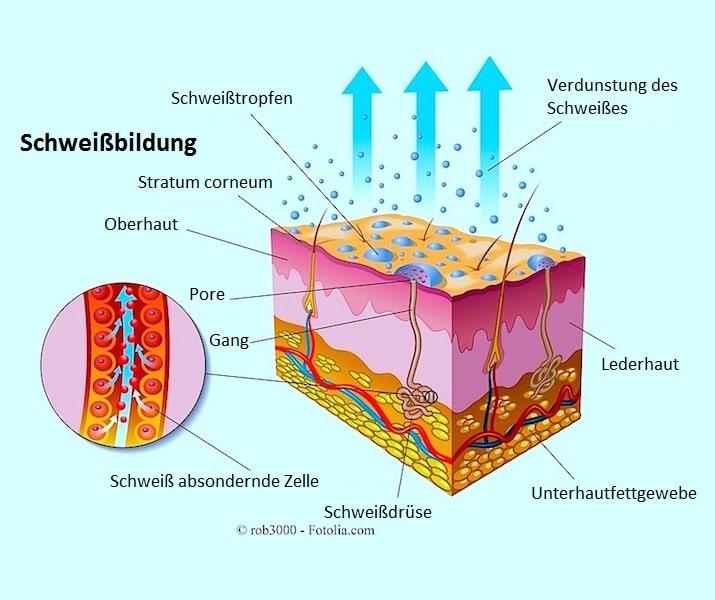 Schweßbildung,Verdunstung,Pore