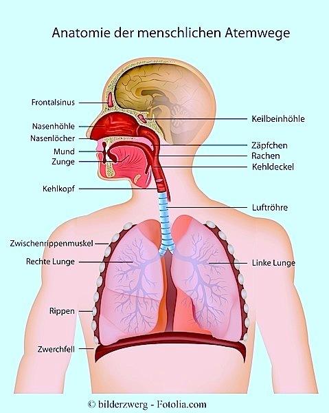 Nase,Hals,Mund,Lungen