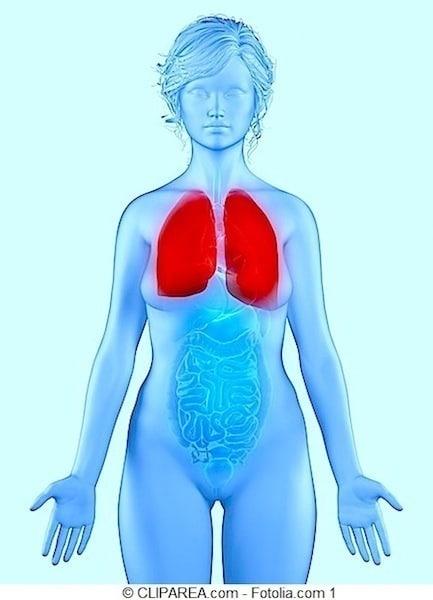 Lungen,Pleura