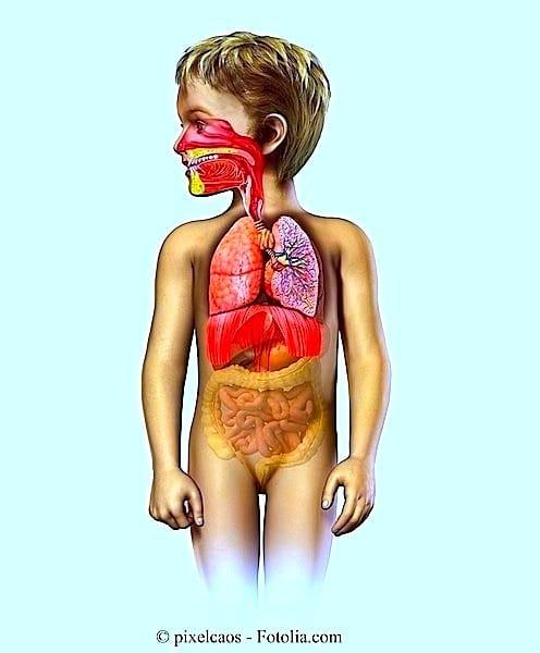 Husten,Kinder,Heilmittel,Lungen