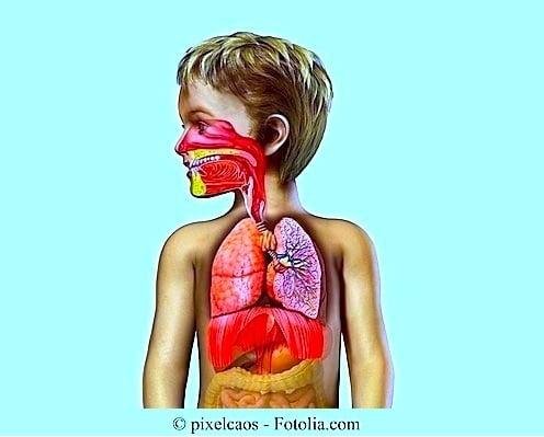 Anatomie,Kind,Lungen,Hals,Nase