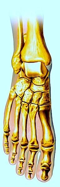 Hallux,valgus,Anatomie,Fuß,Knochen,Schmerz,Ausrichtung,Hohlfuß,Plattfuß,Absätze