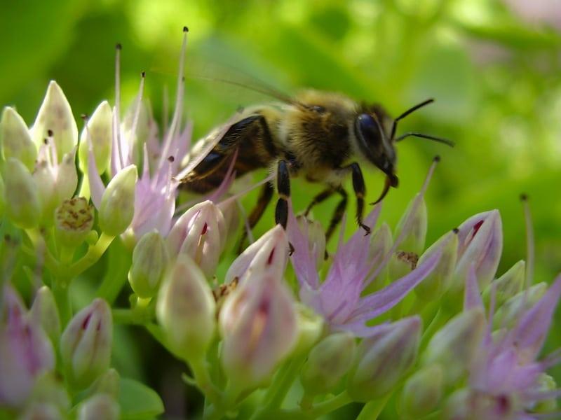 Allergie,Pollen,Frühling,Heilmittel,Antihistaminika