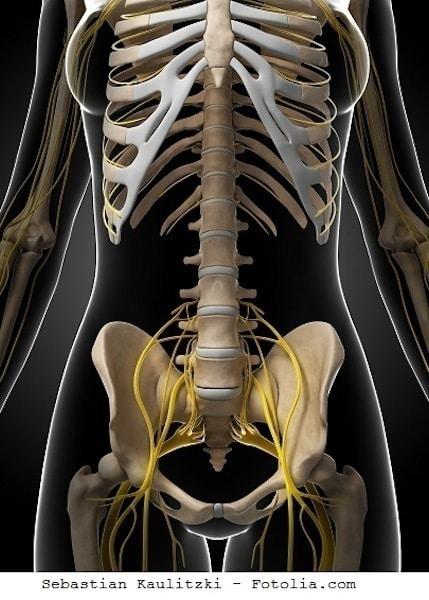 Kreuzbein,Ligamente,Nerven