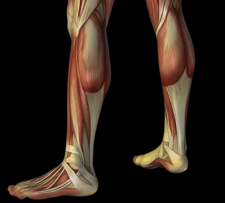 Wade,Schmerz,Muskel