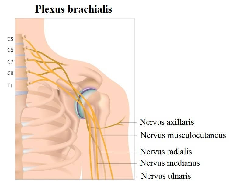 Verletzung des Blutflusses in den Hals Arterie