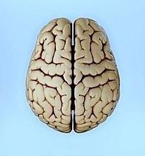 Gehirn,Enzephalon,Lappen,Innen
