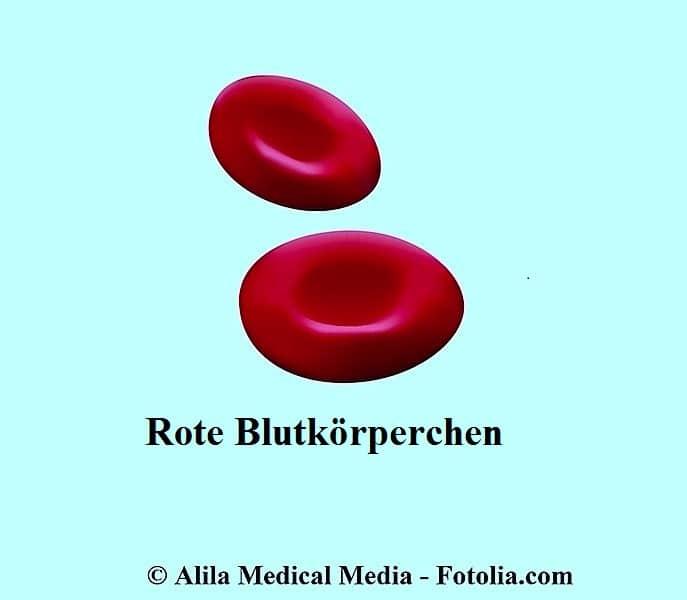 Rote Blutkörperchen,Hämatokrit