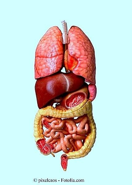 Darminfarkt