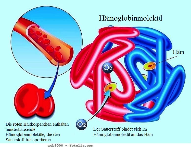 Erhöhtes Hämoglobin,niedrig,rote Blutkörperchen