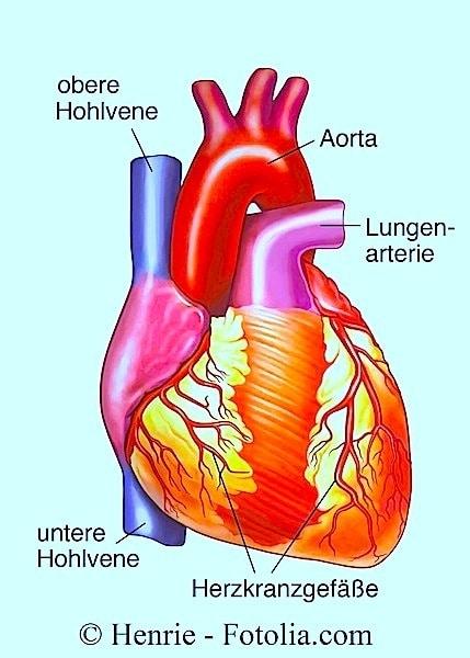 Kardiale Arrhythmie,Herz