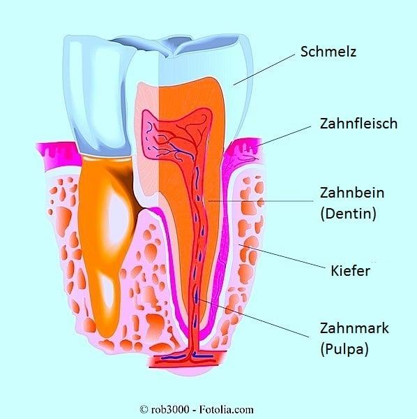 Zahn,Zahnbelag,Zahnstein