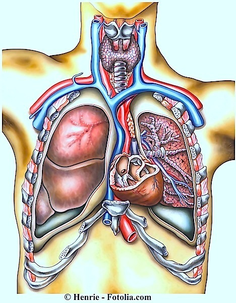 Angina pectoris,Thorax,Brust