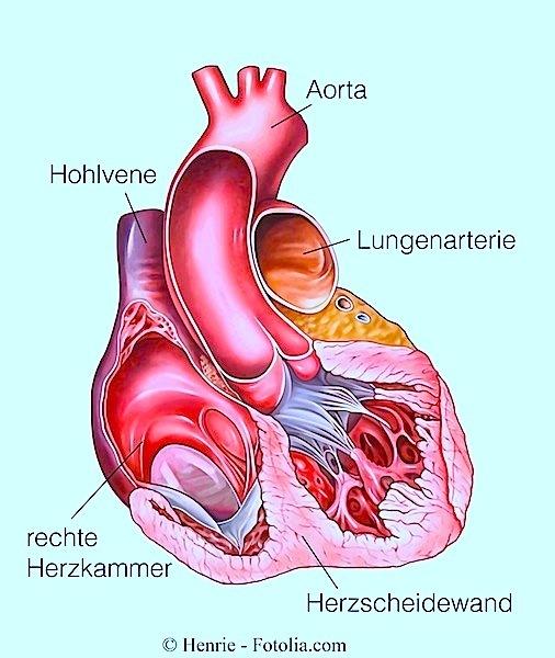 Herz,Herzschlag