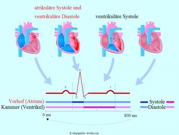 Systolen-Diastolen