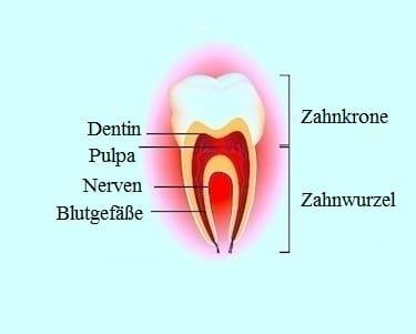 Zähne,Probleme,Symptome,Anatomie,Pulpa