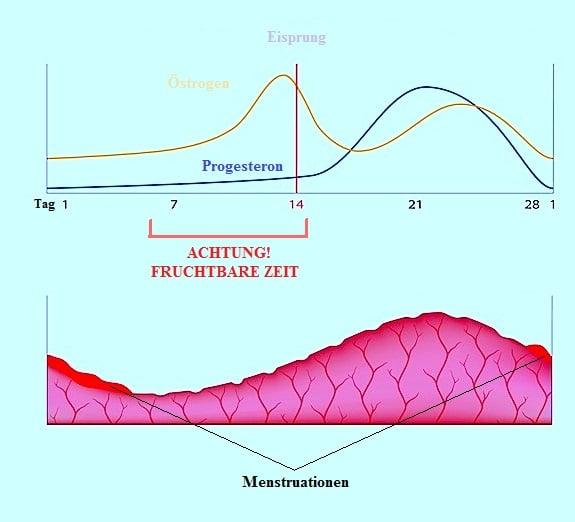 Verspätete Menstruation