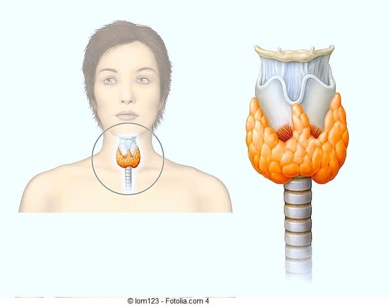 Symptome der Hypothyreose