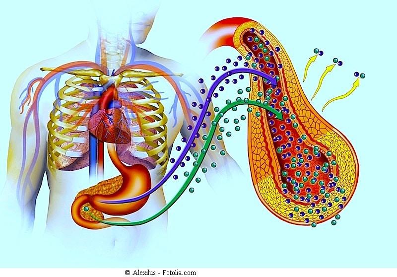 Symptome der infektiösen Peritonitis