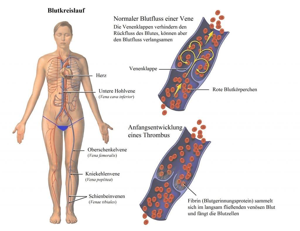 Berühmt Nerven Im Bein Zeitgenössisch - Anatomie Ideen - finotti.info