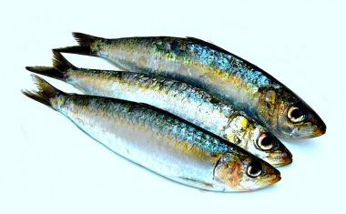 Fisch-enthält-Omega-3-Fettsäuren