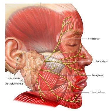 Gesichtsnervs-Nervus-facialis