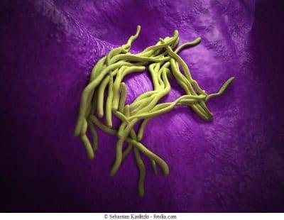 Legionella-pneumophila