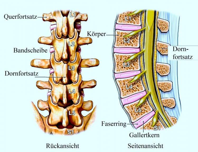 Anatomie, Lendenwirbelsäule