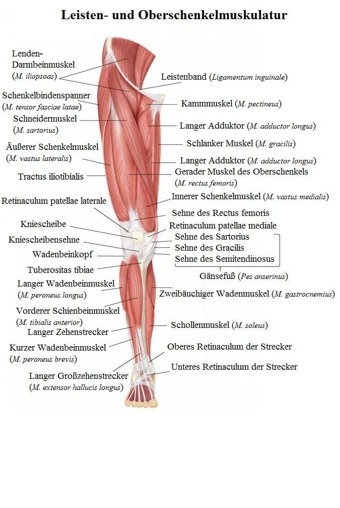 Ischias, Ischialgie, Schmerz, Therapie, Was hilft, Definition, Schwanger