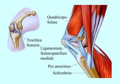 Quadriceps, Sehne, Pes anserinus, Schienbein