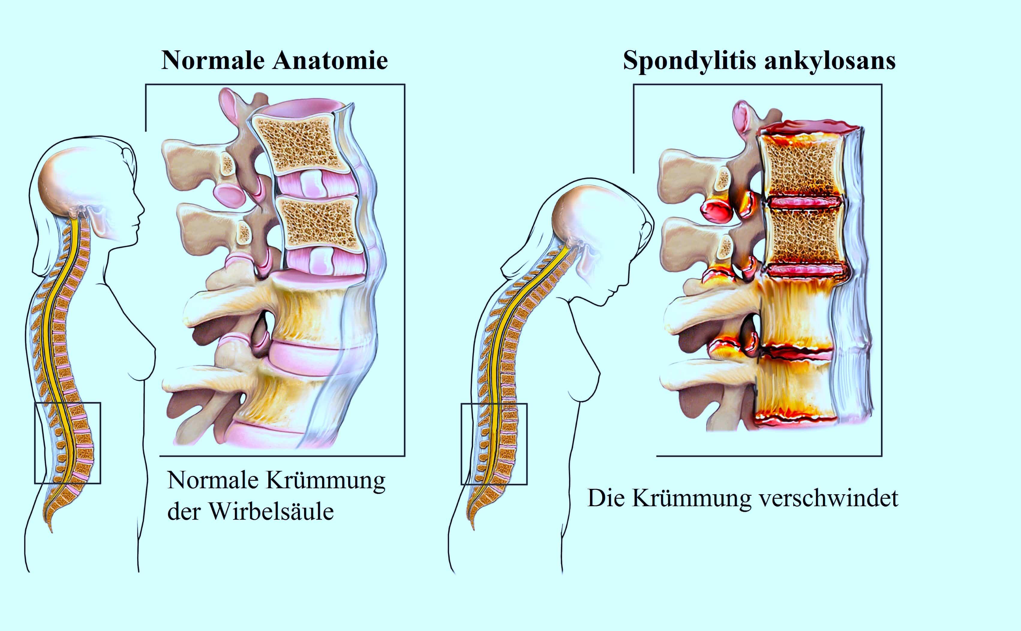 Großartig Einheit 3 Anatomie Und Physiologie Galerie - Anatomie Und ...